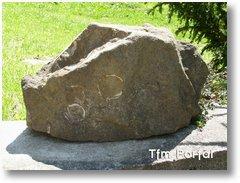 Schitul Retezat piatra scoici
