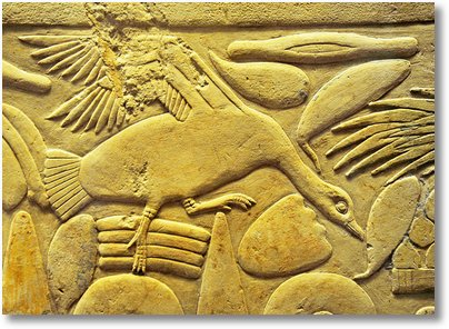 egipt bird 23