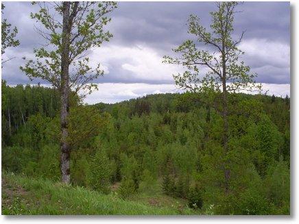 Pokaini-Forest6