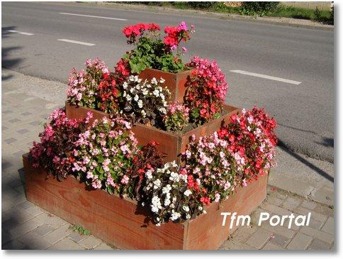 Campulung Moldovenesc flori18
