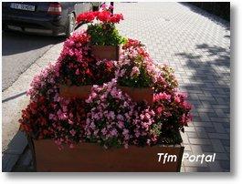 Campulung Moldovenesc flori19