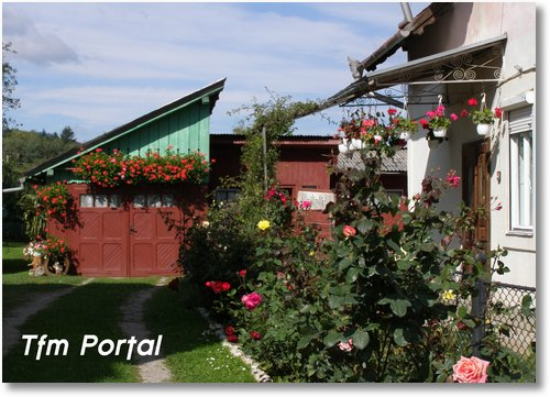 Campulung Moldovenesc flori2