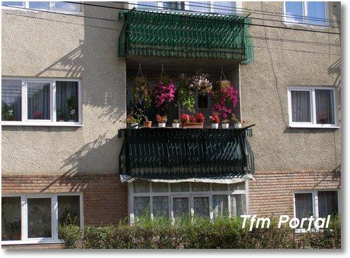 Campulung Moldovenesc flori28