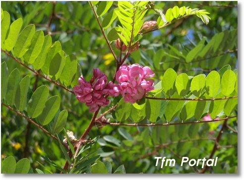 Campulung Moldovenesc flori8