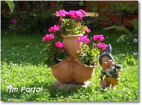 Campulung Moldovenesc flori pitic