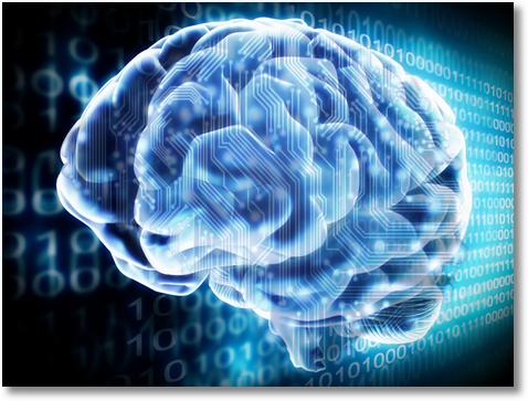 creier01