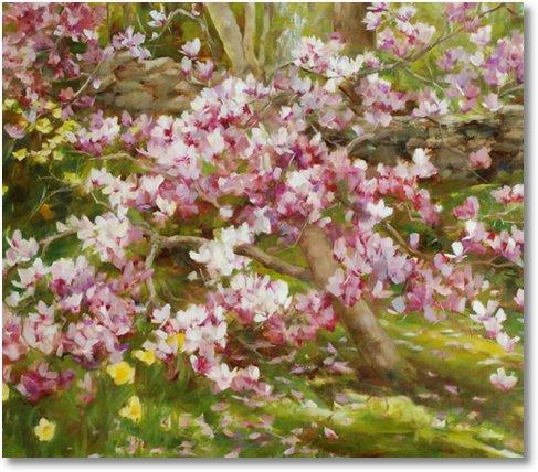 primavara magnolie