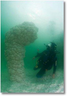 marea moarta pilon2
