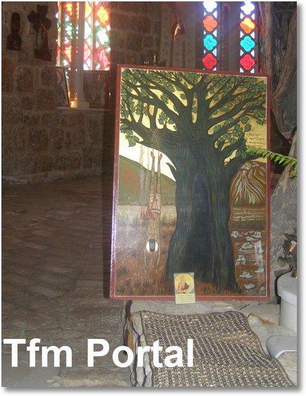 Sfantul Efrem cel Nou Nea Makri copac2
