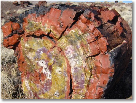 Petrified Forest National Park3