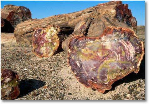 Petrified Forest National Park, Arizona2