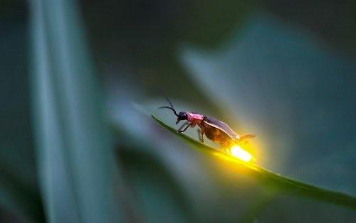 lumina licurici1