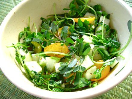 Portulaca oleracea salata
