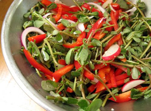 Portulaca oleracea salata2